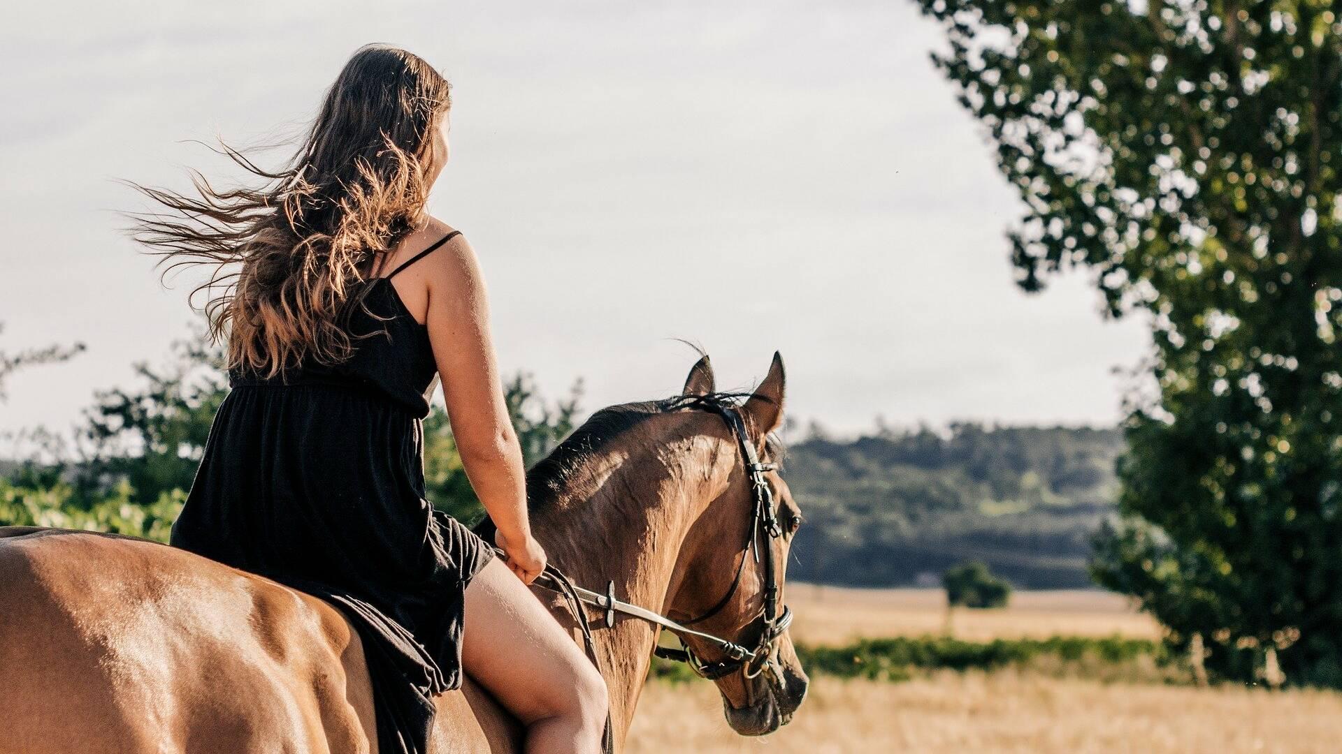 Cheval, Équitation