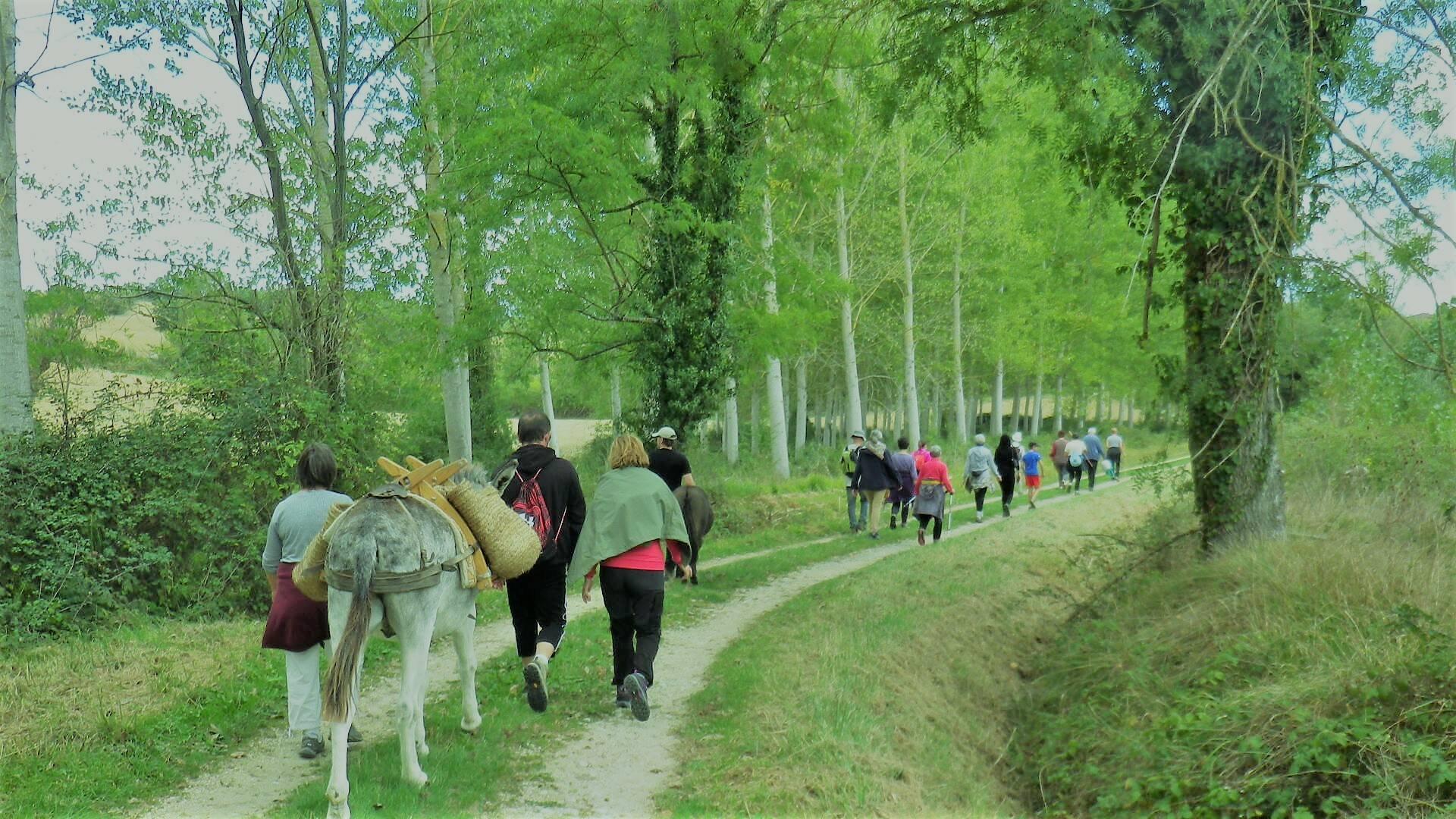 Walking, Puylausic, Lombez, Samatan, Savès, Gers, Gascogne, France