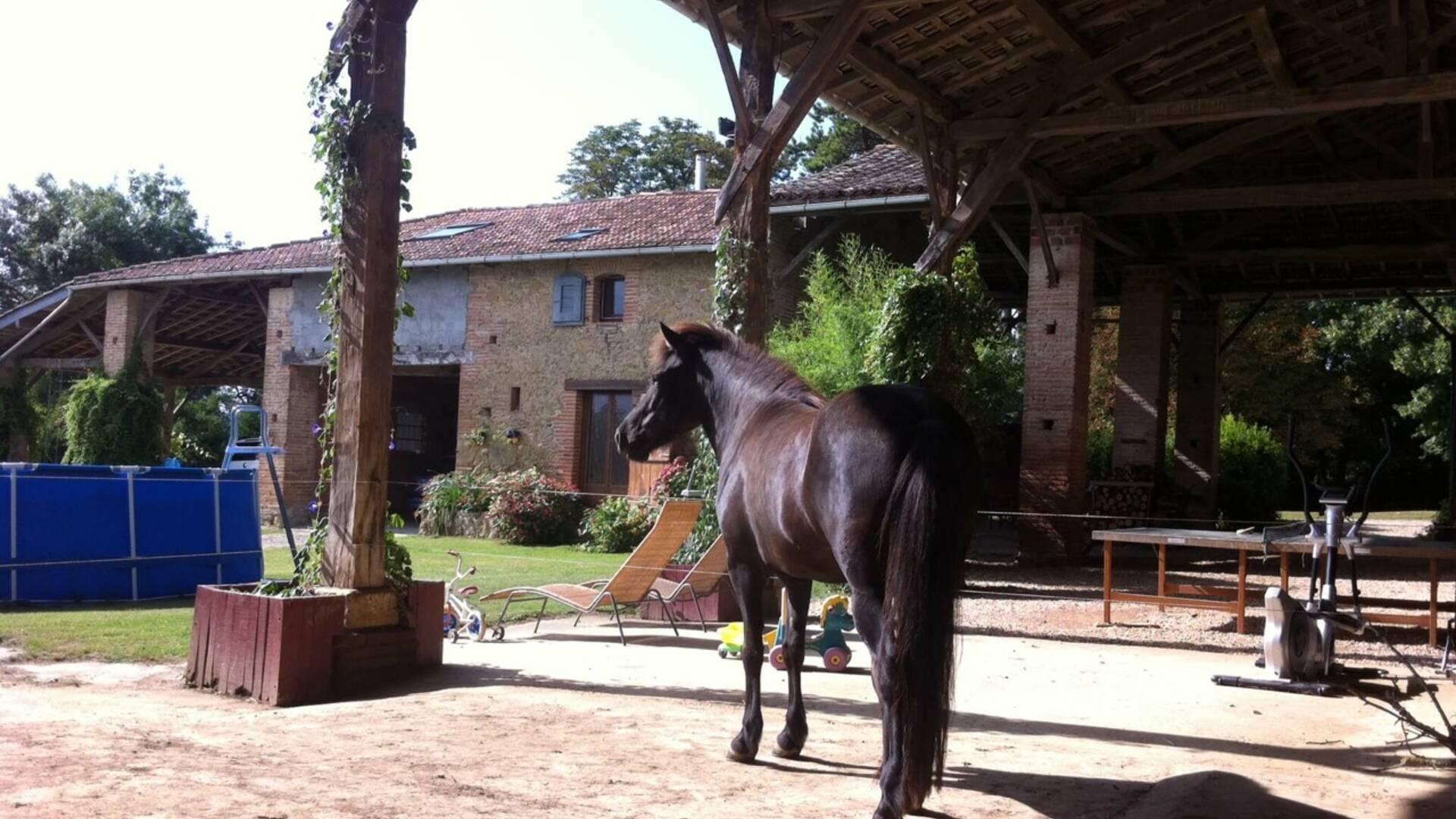 "Horse, Gîte ""Micalon"" ***,  Gaujac, Lombez, Samatan, Savès, Gers, Gascogne, France"