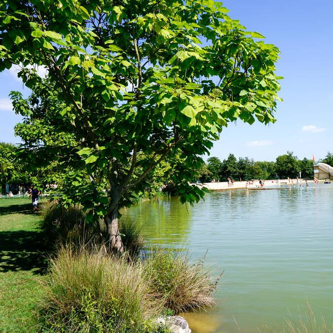 Lac de Samatan, Samatan, Lombez, Savès, Gers, Gascogne, France