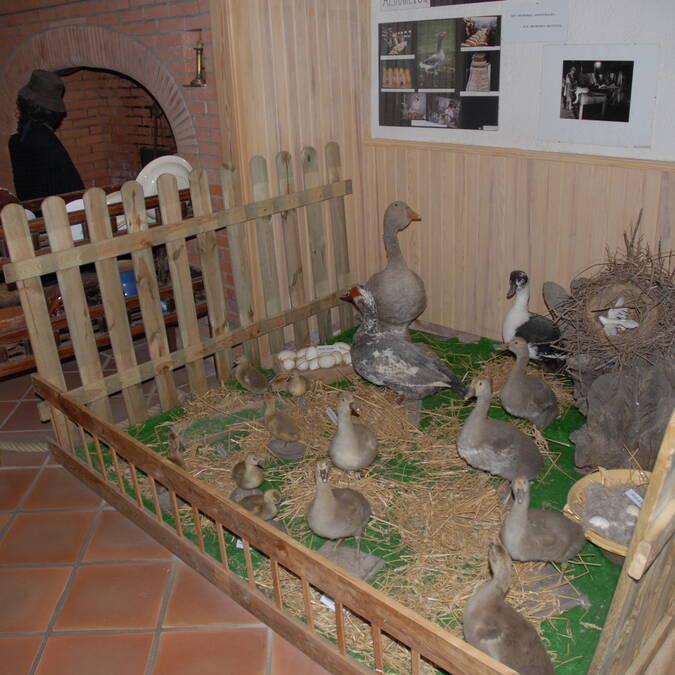 Musée du Foie Gras, Samatan, Lombez, Savès, Gers, Gascogne, France
